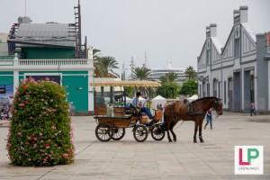 Hevosajelu Las Palmasssa