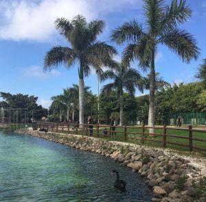 Puistot Las Palmas: Parque Juan Pablo II. Mustia joutsenia uimassa lammessa.