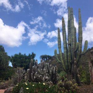 Gran Canaria puistot: Jardin Canario. Pelkästään kaktuksia on lukuisia.