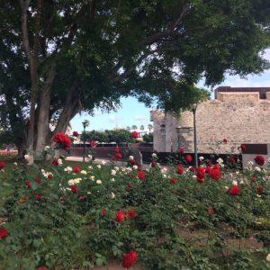 Punaisia ruusuja Castillo de La Luz, puistot Las Palmas