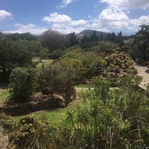 Jardin Canarion vehreää maisemaa
