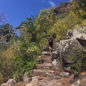 Rappuset Jardin Canariossa