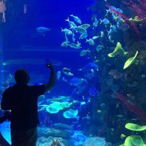 Akvaario Poema del Marissa