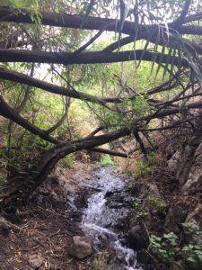 Patikointireitti Gran Canarialla Barranco de Los Cernícalos
