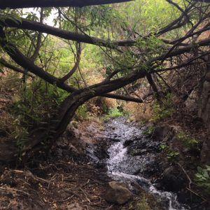 Barranco de Los Cernícalosin vaellusreitti seuraa pientä puroa.
